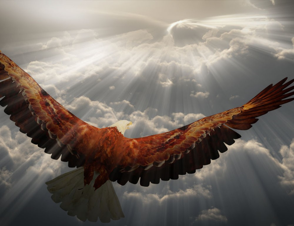 It's hard to Soar Like An Eagle …